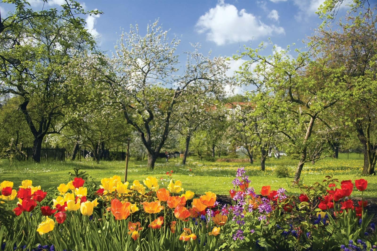 Spring-flowers-fruit-trees-bloom